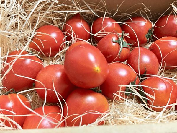 お客様の声 トマト